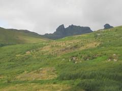IMG_2686 (noblemike1) Tags: scotland lorne