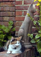 302774 (Steve Franklin Images) Tags: sculpture cats pets colour animals vertical garden franklin steve scenics stevefranklin