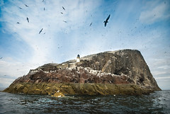 Bass Rock (gms) Tags: lighthouse birds island scotland seagull northberwick sanctuary firthofforth bassrock solongandthanksforallthefish nodolphins