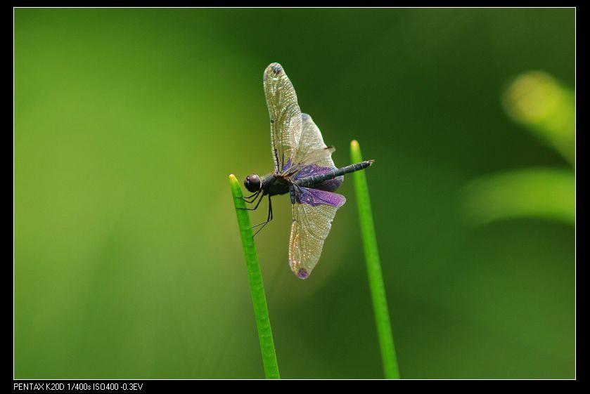 Novoflex Leica 560/6.8