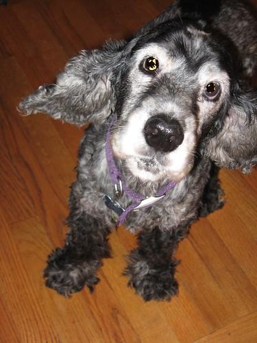 Daisy - gotta love the ears!!
