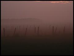 Pretty clouded vision (pyriet) Tags: trees mist berg fog drunk sunrise dark sticks gloomy cows walk earlymorning fences fields poles treeline remorse depth noisy regret shrubbery tooearly wandeling morningwalk spijt velden zat bertem korbeekdijle ochtendwandeling awwmyhead