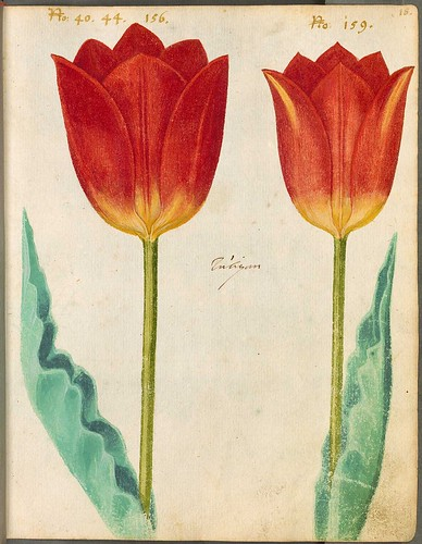 17th century florilegium