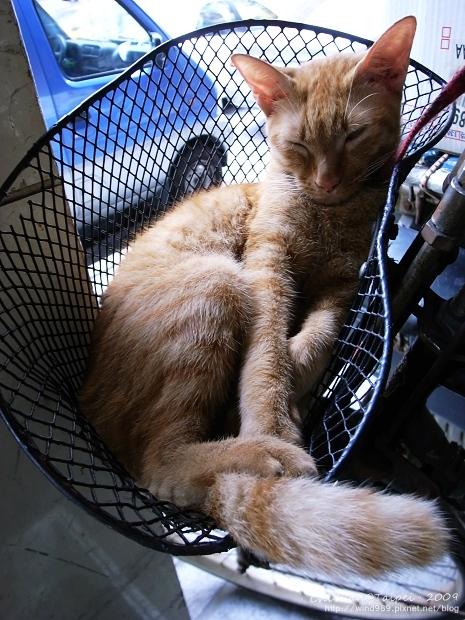 [台北]Cat。這天的貓籃有點擠