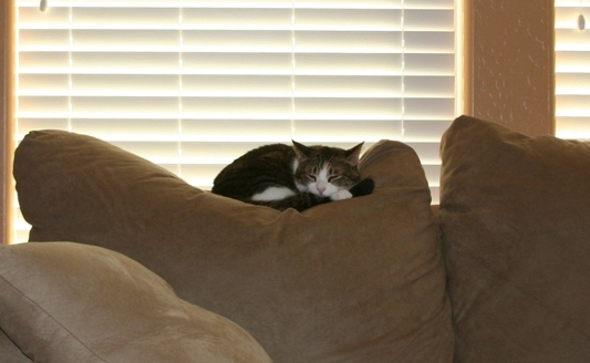 IMG_1909_CouchWithCat