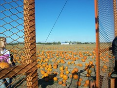 the pumkin patch (lindas shots) Tags: autumn see things we