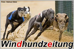Greyhound-Finale-480-Hündinnen