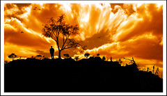 DETERMINED (DEVENDRA PAL(AWAY)) Tags: trees sunset red orange sun india white black reflection tree bird water birds yellow clouds river photography photo october communication dev pal 1001nights 2009 silhoutte devendra mywinners abigfave dpal betterthangood cinecraft newgoldenseal dpalphotography cinecommune