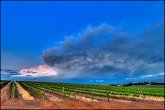A Turbulent Sky (Craig Pitchers) Tags: storm clouds southafrica vines nikon thunderstorm hdr rainclouds durbanville d90 1024mm flickrunitedaward