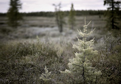 i & I (Aleksandr Matveev) Tags: nature landscape dof bokeh f14 voigtlander north tones nokton 58 gmt voigtlandernokton58mmf14sl updatecollection