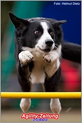 Agility Hundesport - Border Collie
