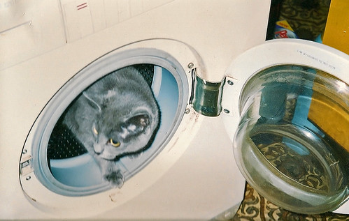 No Washing Machines Were Harmed In The Making Of This Picture ( Or Cats )