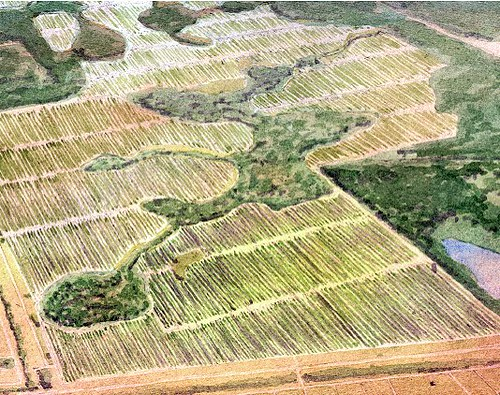 isolated wetlands and citrus groves (courtesy of Dover Kohl & Partners)