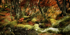 Enchanted Wood (Kevin Day) Tags: photoshop scotland isleofskye explore lordoftherings kevday frontpage artistspick cmfairy