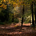 Hartshill Hayes  Autumn Light