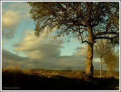 Les brindilles qui scintillent (Dominique Dumont Willette) Tags: automne lumire turquoise champs ciel arbres terre nuages roux gers midipyrnes brindilles pujaudran