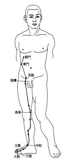 足厥陰肝經經筋圖