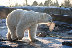 6336 (Arie van Tilborg) Tags: winter zoo blijdorp wintertuin dierentuin blijdorpzoo diergaarde rotterdamzoo arievantilborg