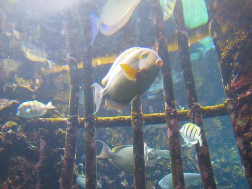 fish jail?