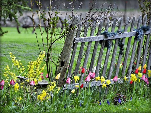 A Fence For All Seasons