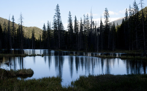 beaver-pond_3