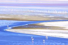Salar de Uyuni, Uyuni, Bolivia (ARNAUD_Z_VOYAGE) Tags: park city pink blue parque sunset red sea cactus sky people orange sun white snow reflection green ice water colors birds yellow azul clouds america train river de landscape tren lago grey volcano town los agua desert flat pentax altitude south border salt lakes reserve flamingos bolivia tourists national andes laguna region nacional salar flamencos altura altiplano cimetery dsert uyuni volcan chilean oruro threes kx volcn potosi colorada tunupa desertio
