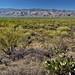 A Desert Wildness of Nature