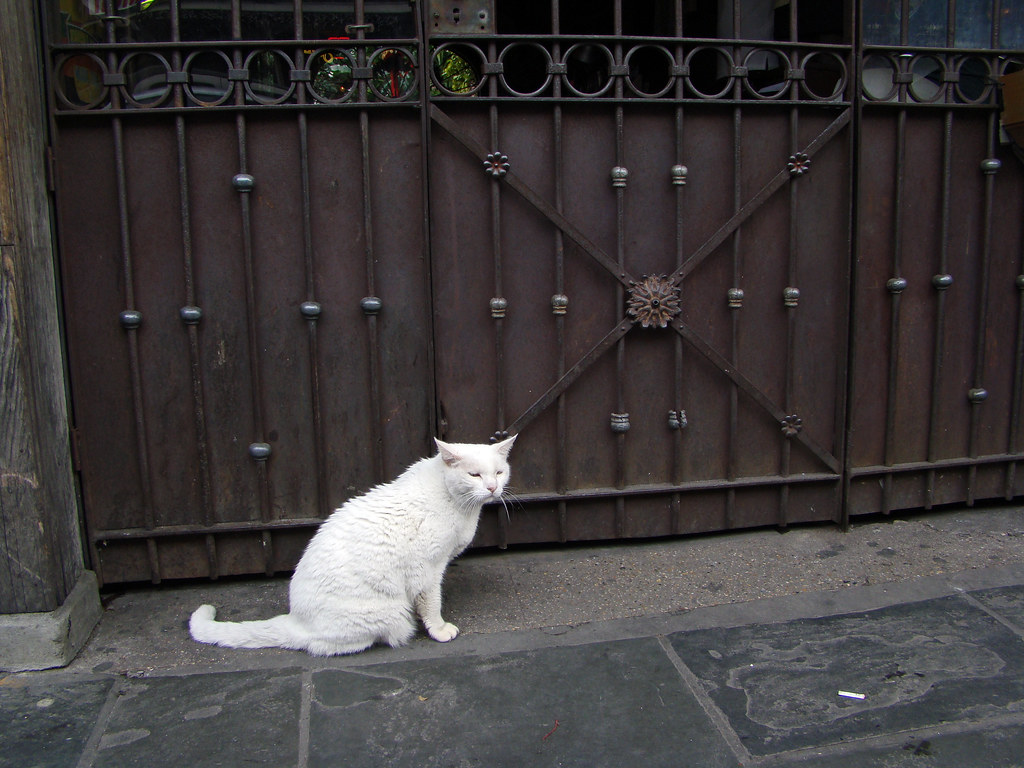 DSC00158 French Quarter cat and iron gate