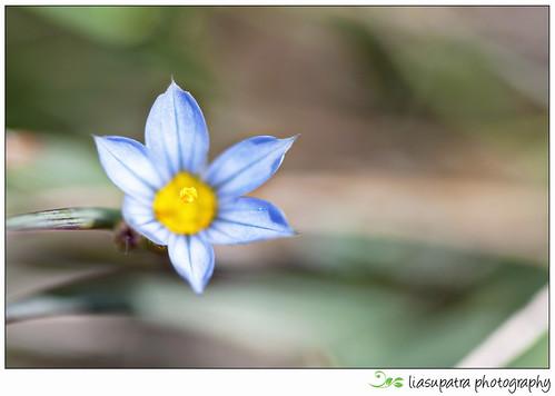 Blogflower4