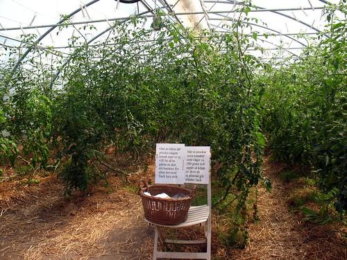 local organic farm