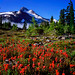 Mount Jefferson and Indian Paintbrush