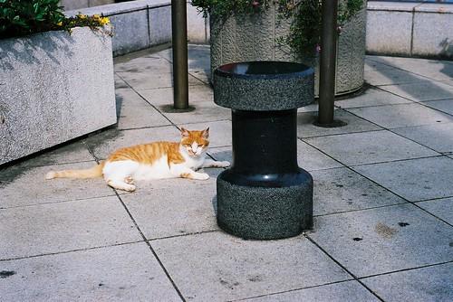 猫と変な物体
