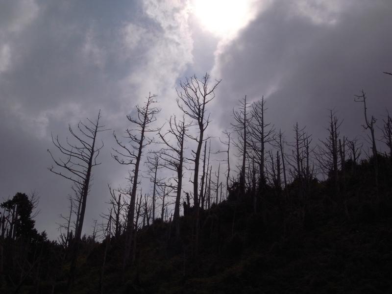 大-白木林