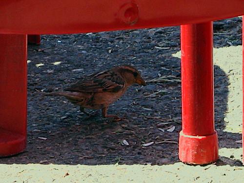La sombra del pájaro