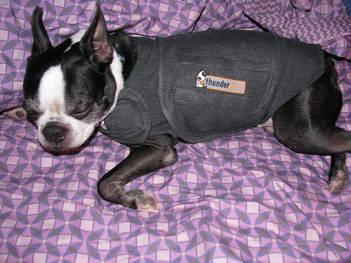 Thunder Shirt makes him very sleepy