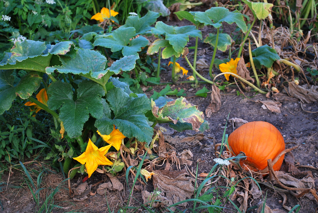 School Pumpkin Patch