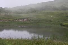湖に霧が降りてきました