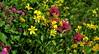 Susi's Closeup of Logan Wildflowers