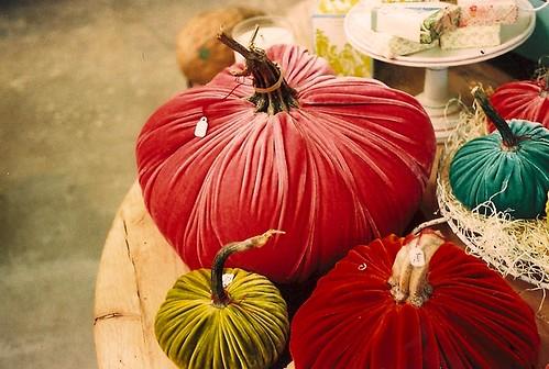 velvet pumpkins.