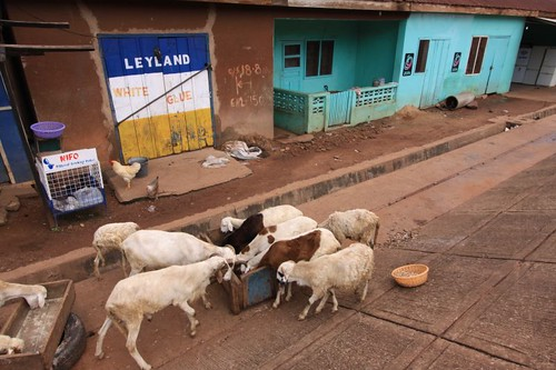 Feeding time in central Tamale...