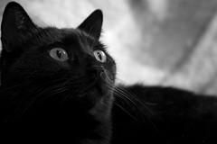 Kira!! (funkyliuk) Tags: bw cat blackcat d50 bn kira gatto biancoenero gattonero