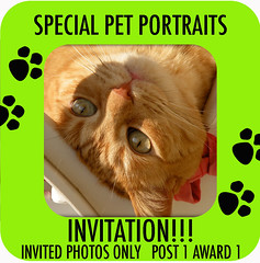 INVITE CODE SPECIAL PET PORTAITS