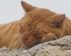 cat 4 (another_web_surfer) Tags: cats cat greece rodos rhodes mandraki