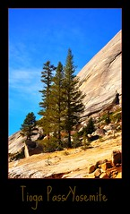 Tioga Pass/Yosemite (janetfo747) Tags: california usa rock pine pass windy yosemite summit redwood sierranevada mountians steep bestofthebest tiogapass highway120 coth supershot abigfave avpa doublyniceshot tripleniceshot mygearandmepremium mygearandmebronze mygearandmesilver mygearandmegold mygearandmeplatinum mygearandmediamond