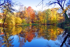 Autumn is lovely (Tobi_2008) Tags: autumn color reflection nature leaves germany deutschland pond saxony herbst natur sachsen tobi teich bltter farbe allemagne spiegelung germania bej abigfave anawesomeshot superaplus aplusphoto platinumheartaward mirrorser artofimages bestcapturesaoi