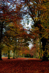 Autumn Alameda... (Chris H#) Tags: autumn trees red brown fall leaves northampton rusty avenue s3000 abingtonpark rustle avenueoftrees nikond5000 autumnalameda awalkshadedbytrees