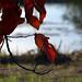 ... momenti d'autunno