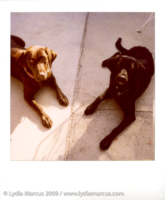 Lucy&Cali-680-11-18-09