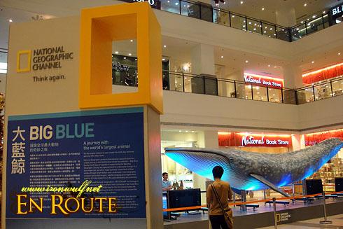 Big Blue  Glorietta 5