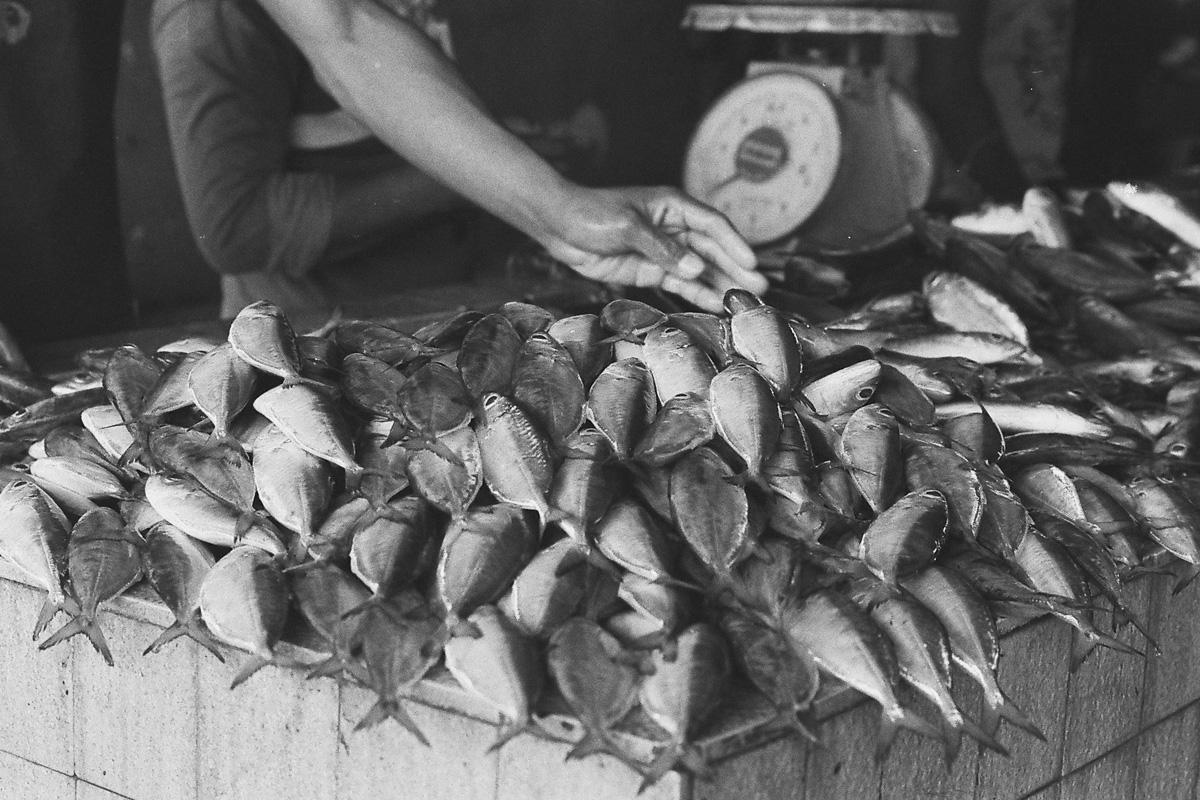 堆积在一起的鱼只